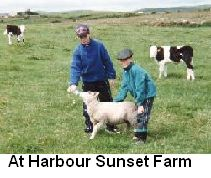 harboursunsetfarm